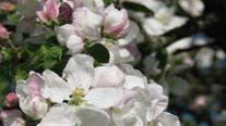 Almanacka - Drömträdgård
